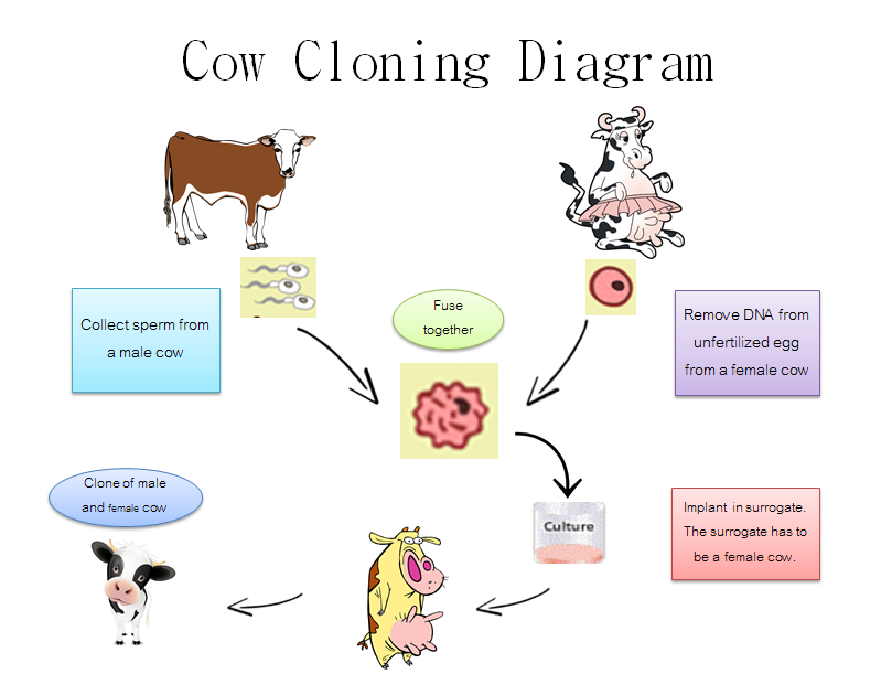 the benefits of animal cloning to society We will then present to the human society the benefits of genetically engineered  animals in order to help them understand the basic factors that led us to the.